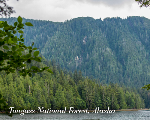 Tongas National Forest, Alaska